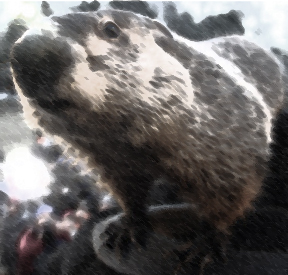 Obvious fake press shot of Punxsutawney Phil coming out of his hole to predict Spring